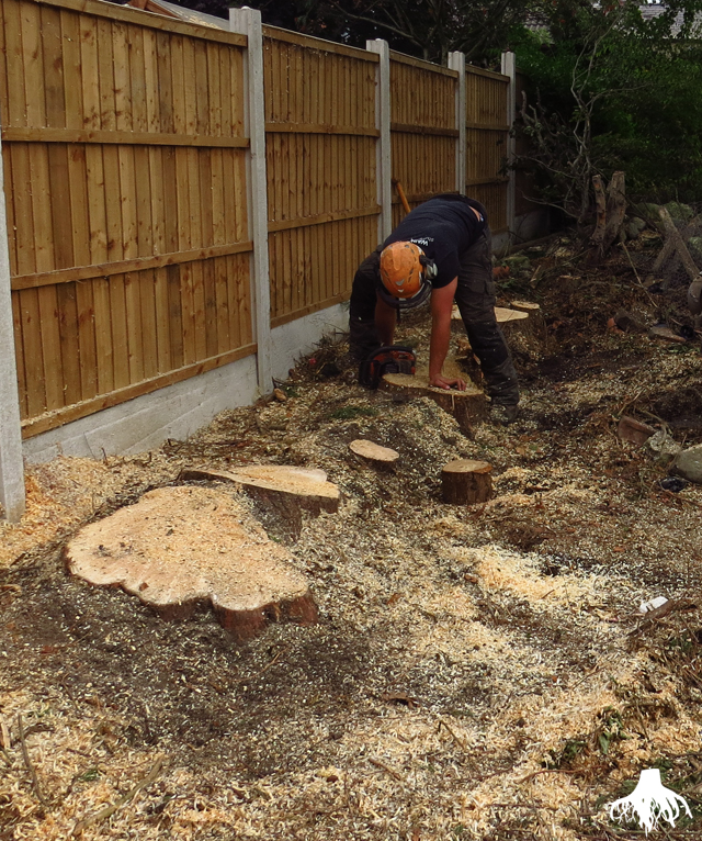 Tree Stump Removal in Chorlton
