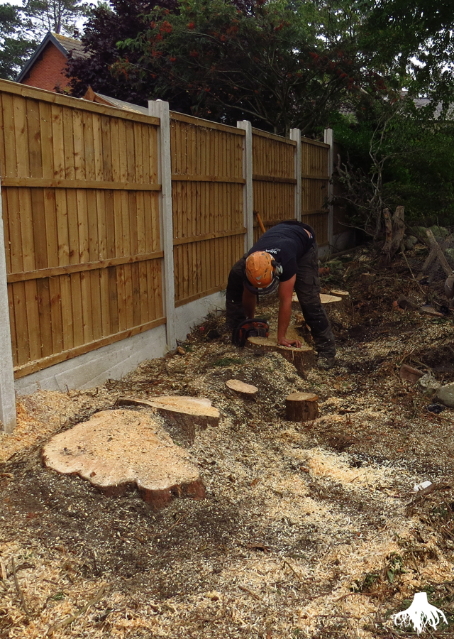 Tree Stump Removal in Bramhall
