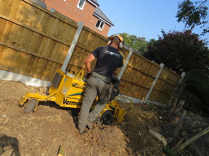 Professional Stump Removal in Chorlton