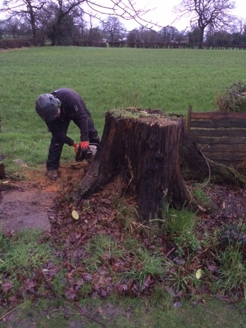 Tree Stump Removal in Timperley