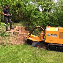 Tree Stump Removal in Bowdon