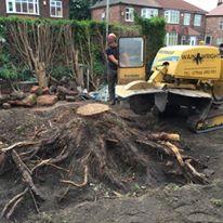 Tree Stump Removal in Didsbury