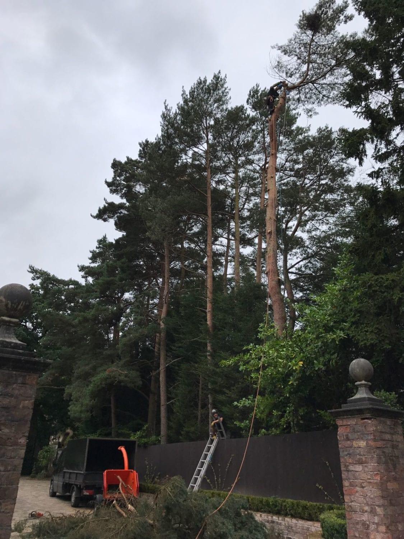 Tree surgeon near me Bowdon Cheshire Altrincham