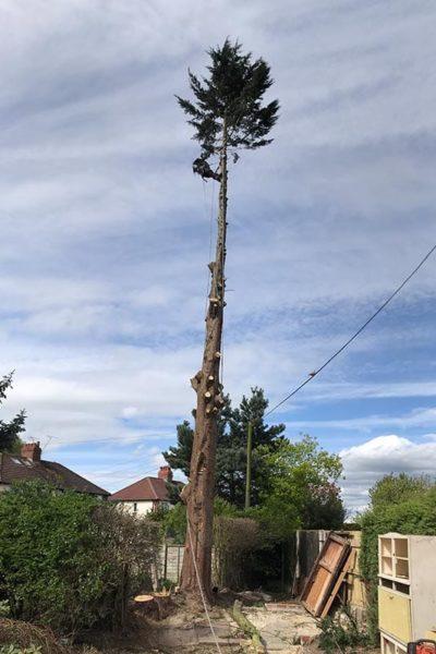 Tree surgeon Gatley Stockport