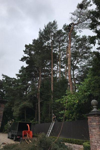 ree removal arborist Northwich Cheshire