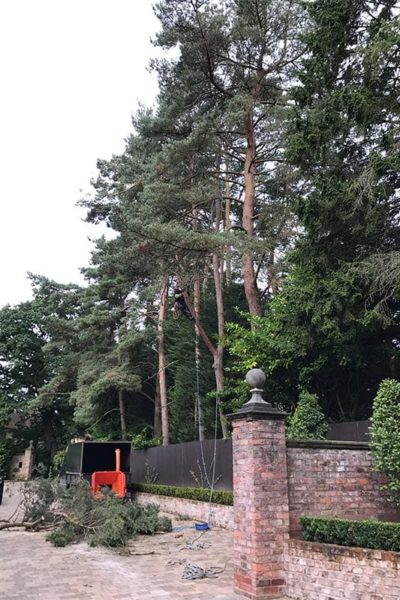 Removal of overhanging tree Hale Cheshire