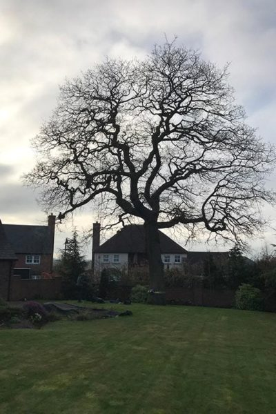 Tree surgeon Sale Greater Manchester