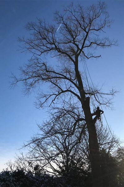 Tree surgeon Didsbury