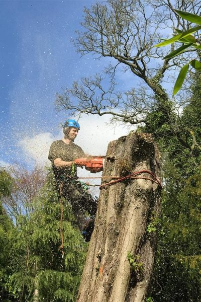 Trees removed Didsbury Manchester