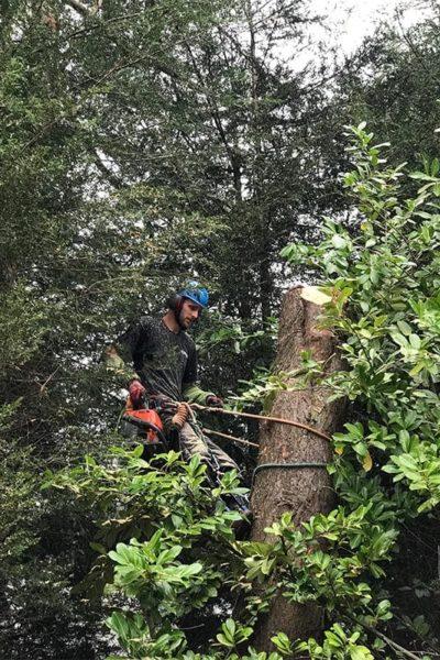 tree surgeon manchester