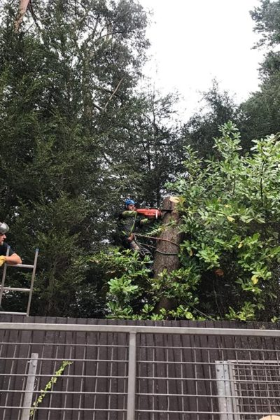 tree surgeon altrincham tree services Cheshire tree removal manchester