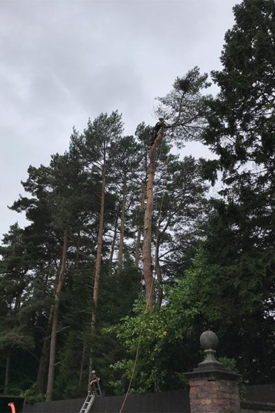 tree pruning & tree removal Timperley Cheshire