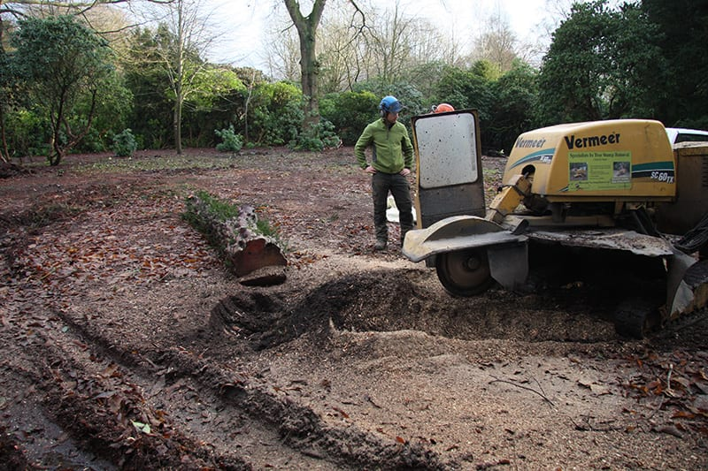 Tree stump removal specialists Holmes Chapel Knutsford Cheshire