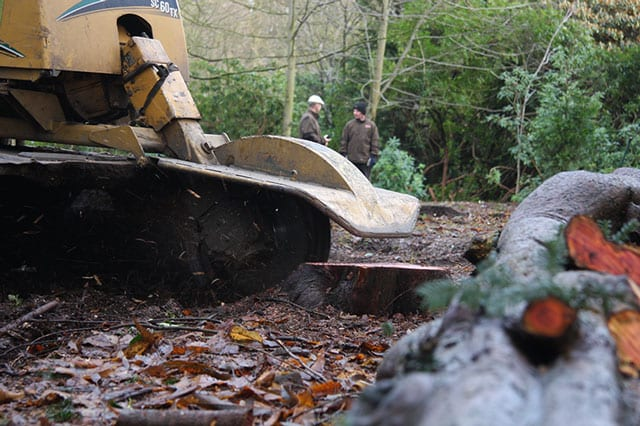 +stumps +tree +removal Gatley Cheadle Stockport Cheshire