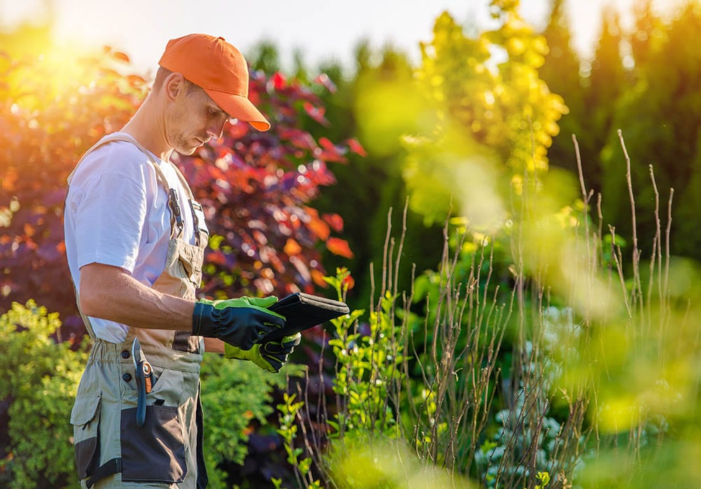 Tree surgeon working for Landscape Gardeners
