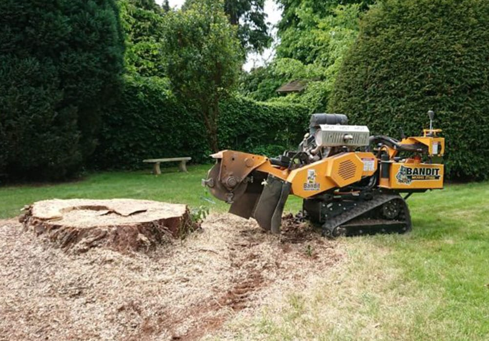Tree stump killer in frodsham
