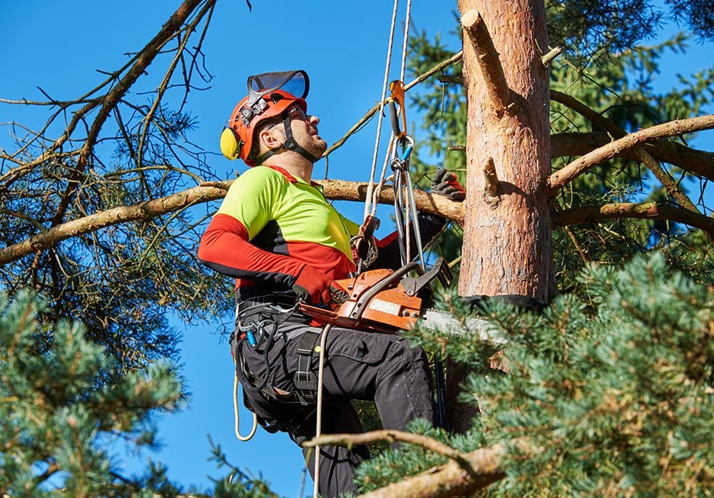 Tree Surgeon Knutsford, Mobberley, Ashley Cheshire