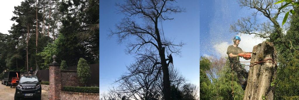 Tree surgeon Bowdon Hale Cheshire